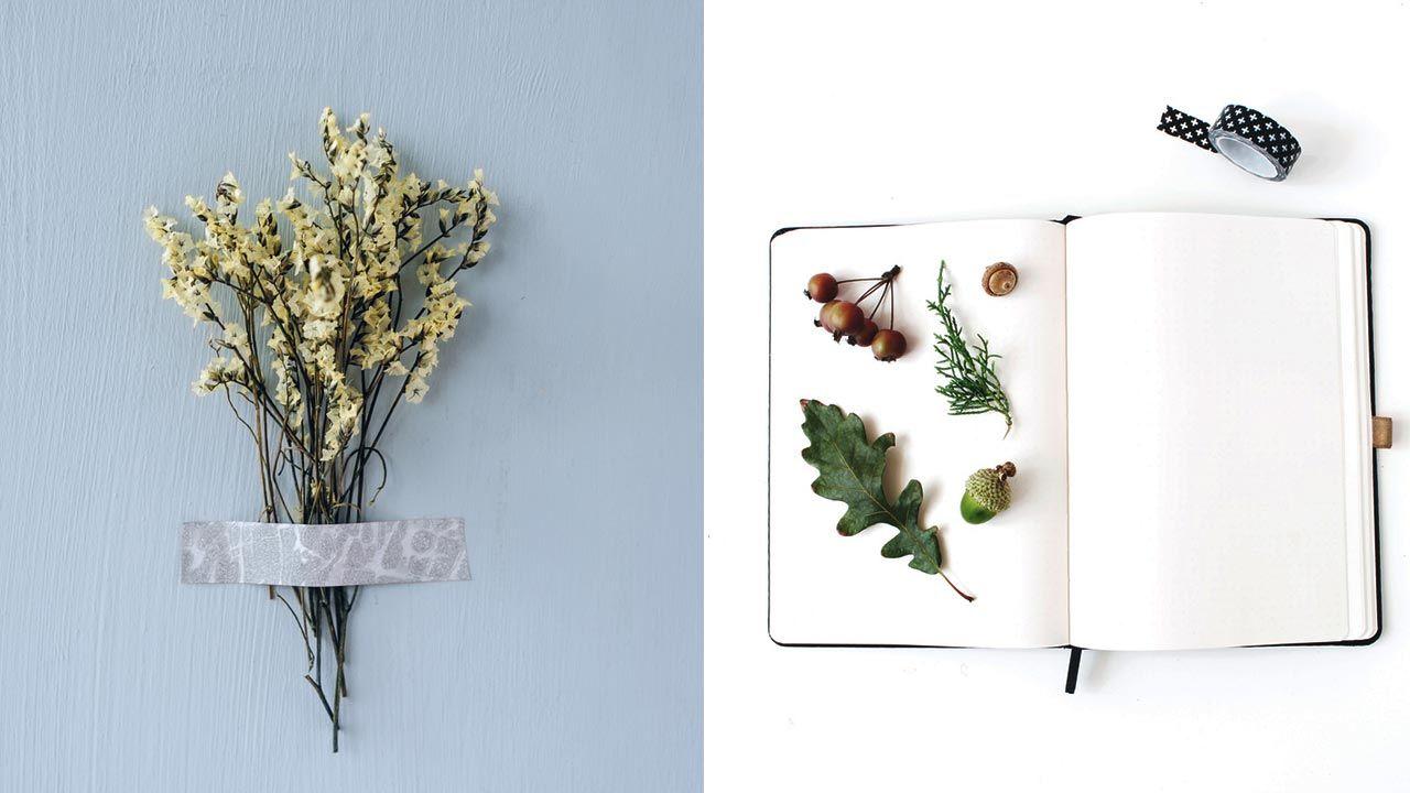 Herbario doméstico