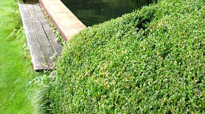 Jardín con estanque