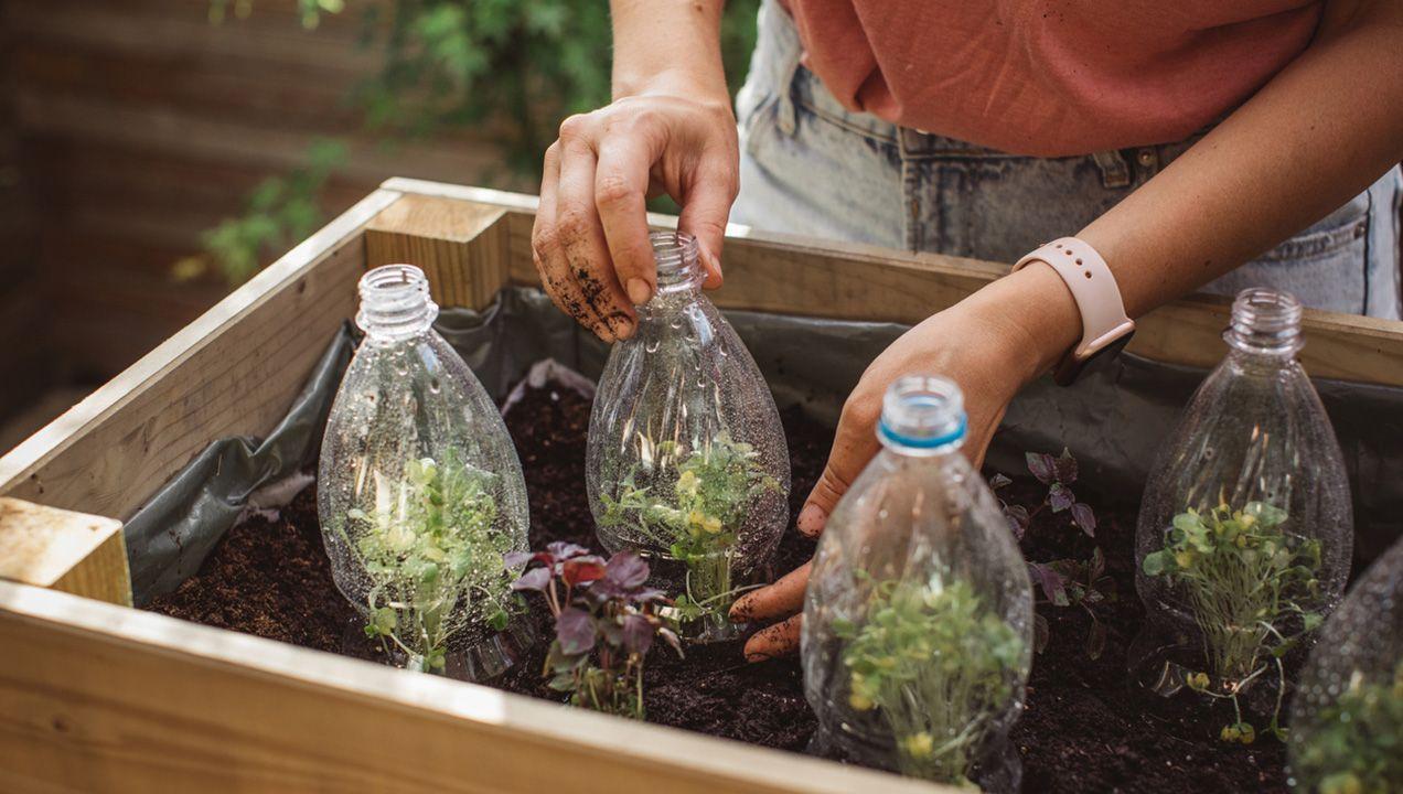 Mini invernadero con botellas de plástico