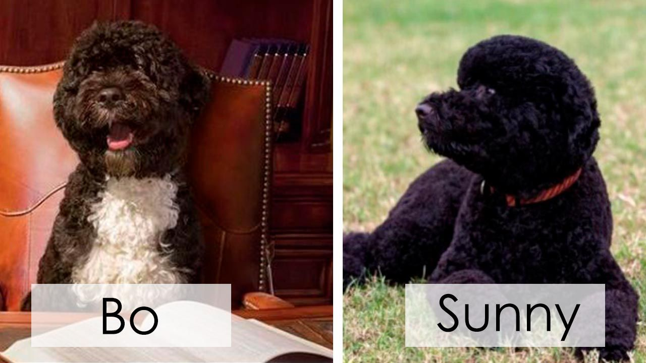 Bo y Sunny