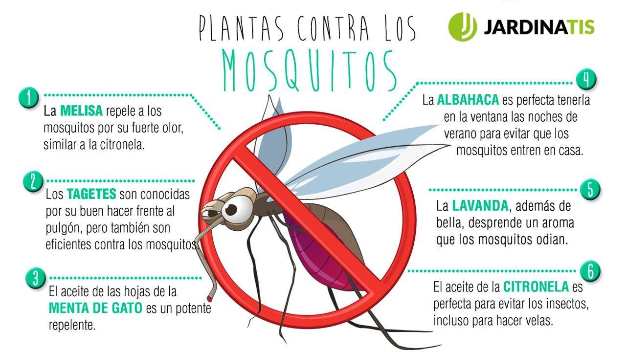 7 plantas contra los mosquitos