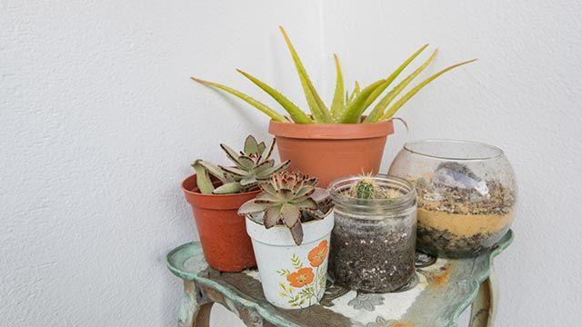 Maceteros para cactus con tarros de cristal