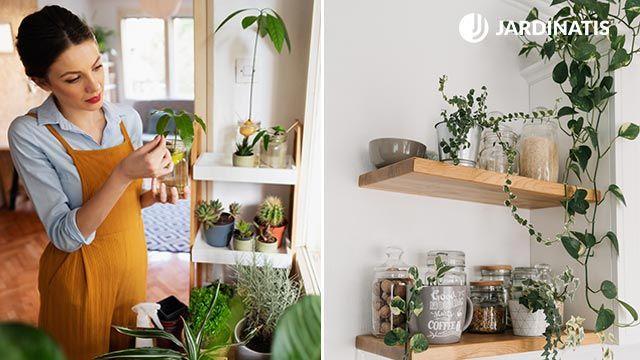 Las plantas alegran y decoran el espacio de la cocina