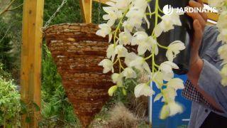 orquídeas colgantes en cestos colgantes