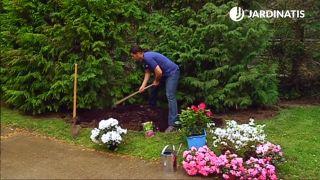 ¿Cómo conseguir que las azaleas y los rododendros prosperen en el jardín?