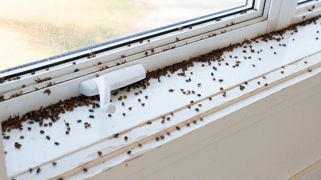 Cómo evitar la aparición de plagas en casa