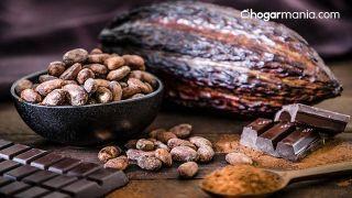 Cómo hacer trufas de chocolate con plantas medicinales (chocolate, ginseng y menta) - Cacao