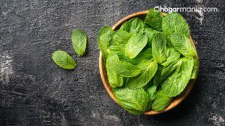 Cómo hacer trufas de chocolate con plantas medicinales (chocolate, ginseng y menta) - Menta