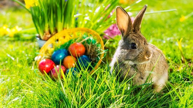 Conejo de Pascua con cesta de huevos decorados