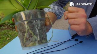 contenedor trasparente de las orquídeas aéreas