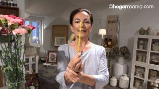 Dos ejercicios y un clavel para una mirada radiante - Lápiz