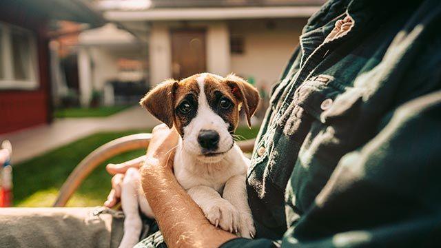 Cachorro sentado sobre las piernas de un chico