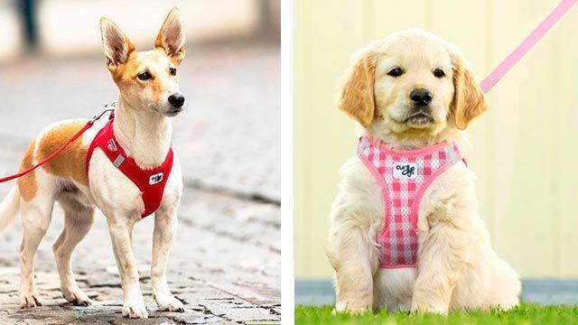 Arnés para perros de Animal Natura