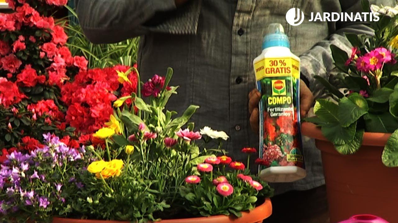 Cuidados de las composiciones florales