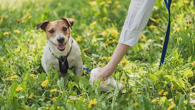 Imagen de un hombre recogiendo las heces de su perro
