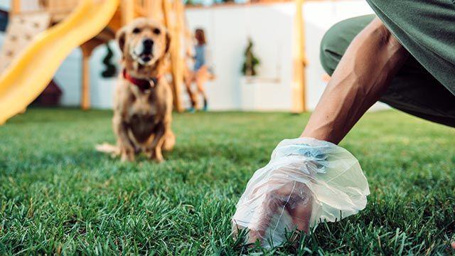 Perro mirando como su dueño recoge sus heces