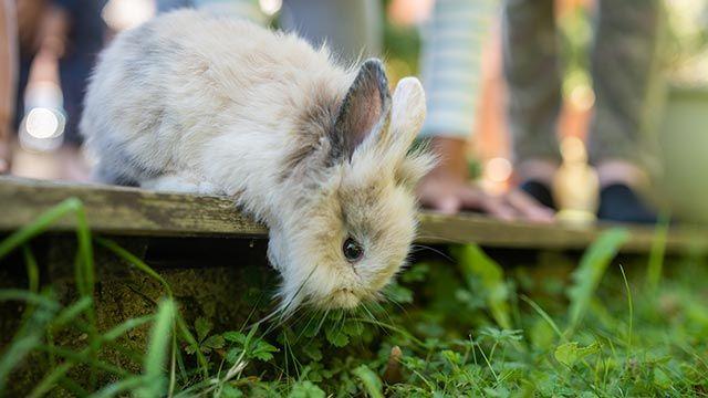 Conejo olfateando