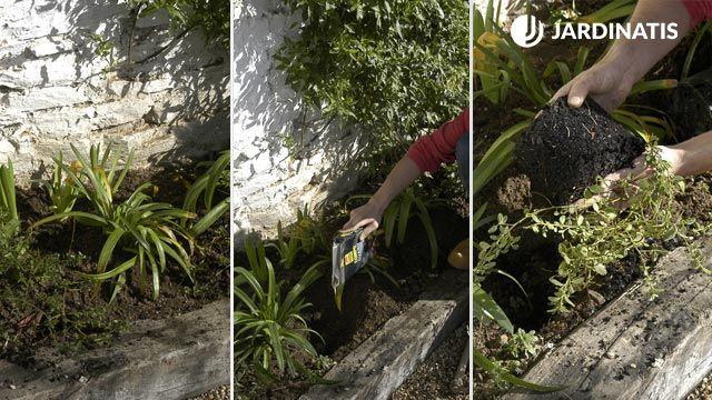 Plantación contra fachada de Agapanthus y Ceanothus thyrsiflorus Repens