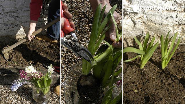 Plantación contra fachada con jacinto y agapanthus