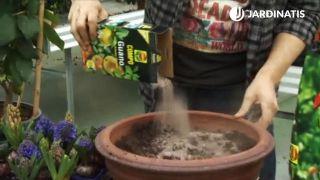 Abono natural para plantación de cítricos