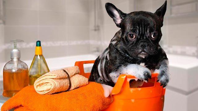 Perro con sus cuidados diarios de higiene