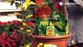 Sustrato para plantas con flor