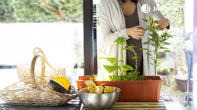 Tener plantas en la cocina reduce el estrés
