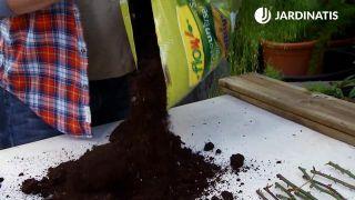 Tierra orgánico para el sustrato de los esquejes de hortensias