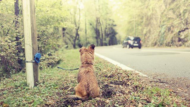 Abandono de un perro en la carretera