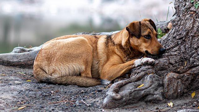 Perro abandonado en un bosque