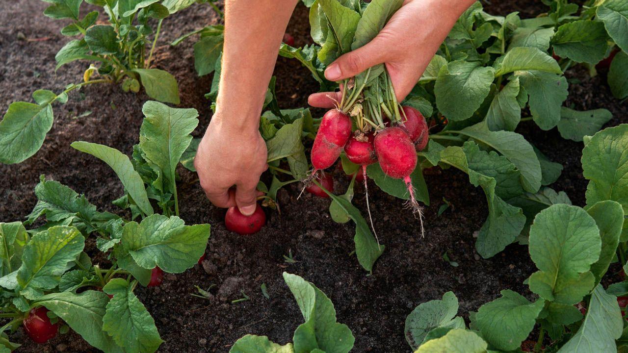 ¿En qué consiste la agricultura ecológica?