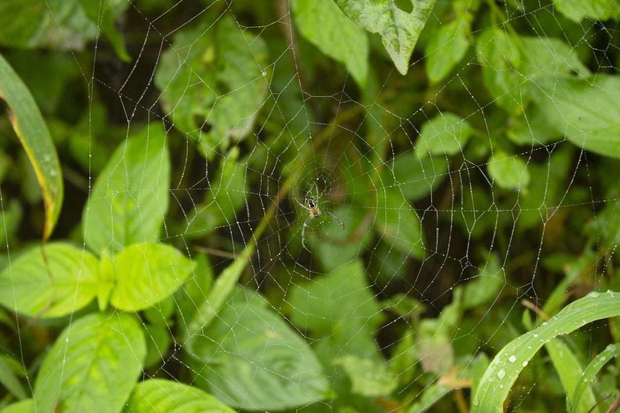 arañas beneficiosas para el ecosistema