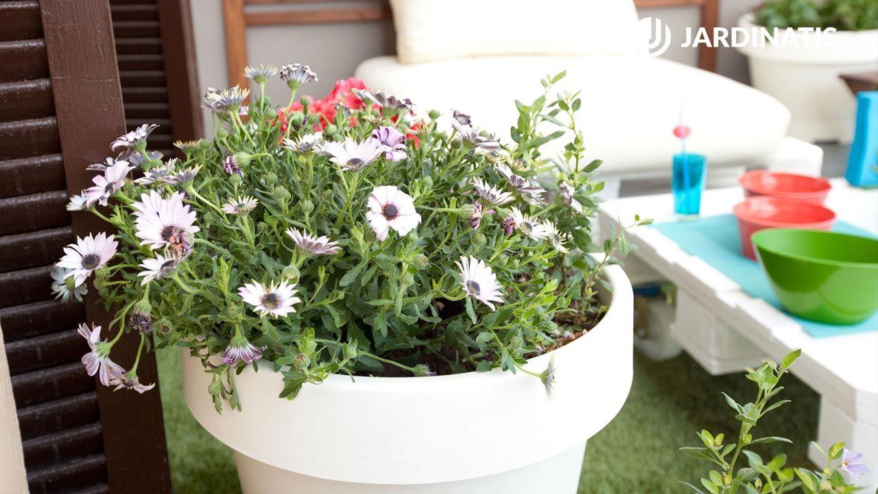 Composición con plantas de primavera y verano para terraza