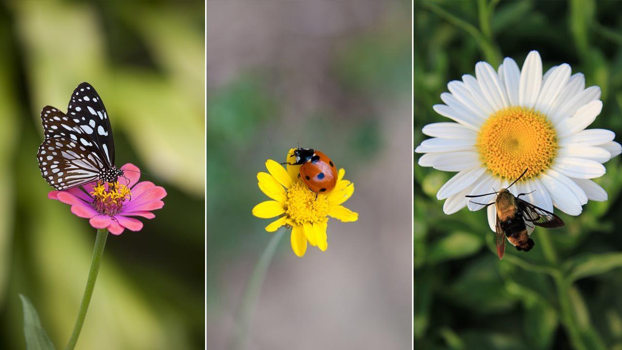 ¿Cuáles son los insectos beneficiosos?