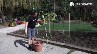 ¿Cómo cultivar tomates en maceteros?