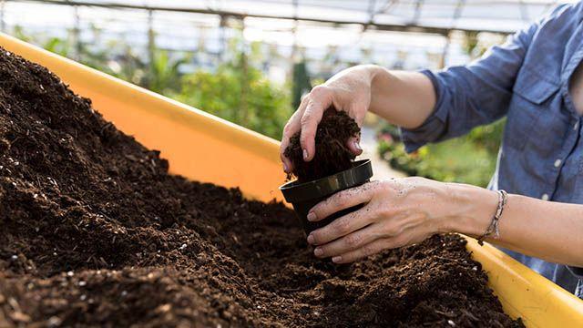 tierra mineral con un sustrato orgánico