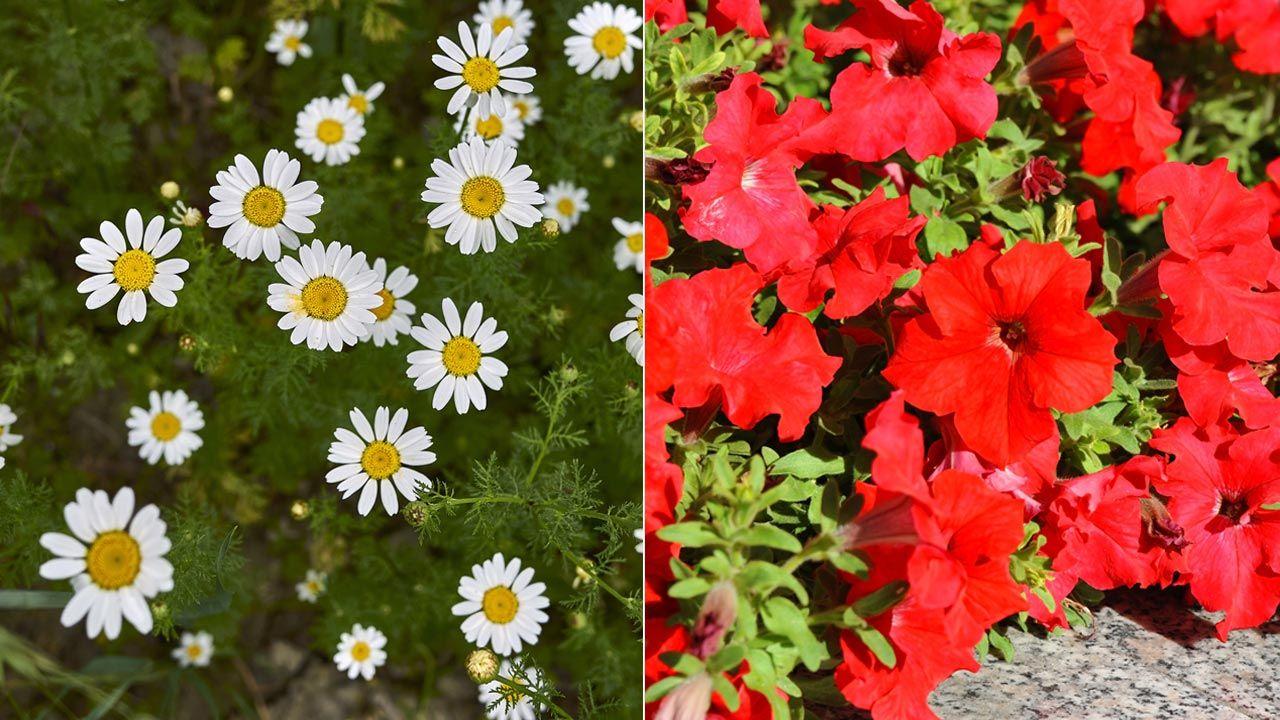 Plantación de primavera en jardinera de exterior