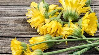 10 plantas medicinales imprescindibles en tu hogar - Árnica
