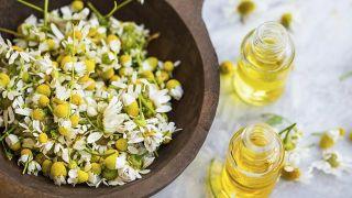 Bardana, planta medicinal limpiadora y antiinflamatoria - Manzanilla