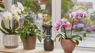 Pulverizador para plantas de interior de Gardena