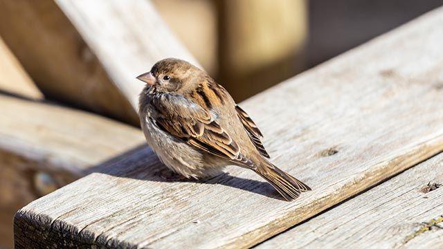 Pájaro posado sobre una mesa