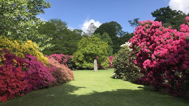 Rododendros de Inglaterra