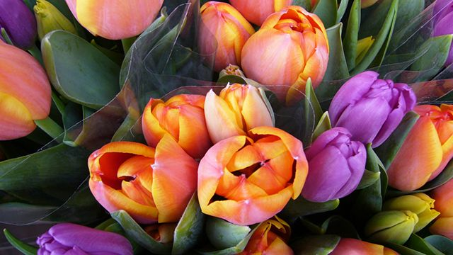 Tulipanes para el día de la madre