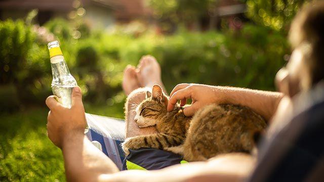 Alojamientos y playas aptas para mascotas - Chico veraneando con su gato