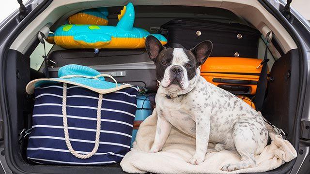 Alojamientos y playas aptas para mascotas - Perro al lado del equipaje