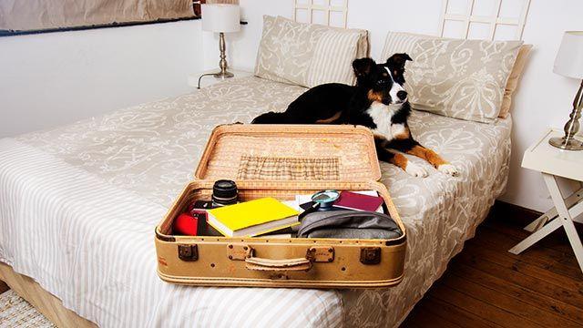 Alojamientos y playas aptas para mascotas - Perro tumbado en la cama junto a la maleta