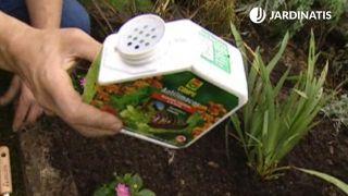 Antilimacos para dalias del jardín