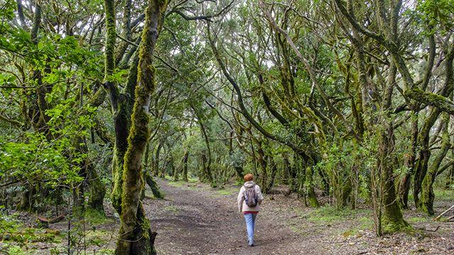 Bosque de Laurel en el Parque Nacional de Garajonay
