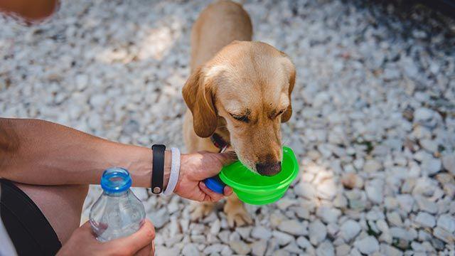 Perro bebiendo en un comedero de silicona