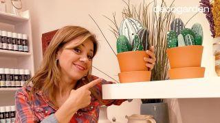 Cómo hacer cactus con piedras (¡Muy fácil!)